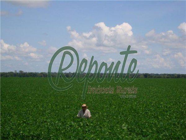 Fazenda em Sinop