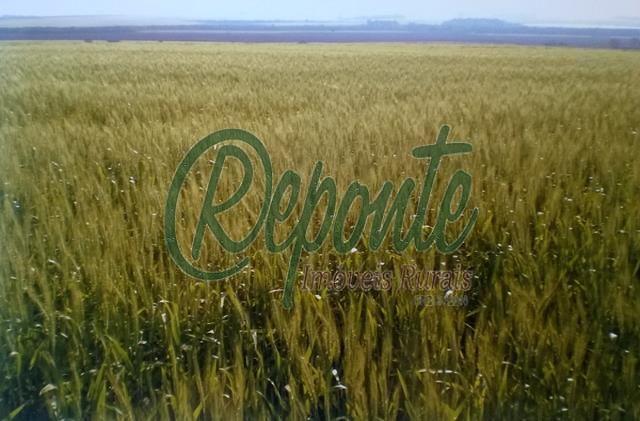 Fazenda em São Borja
