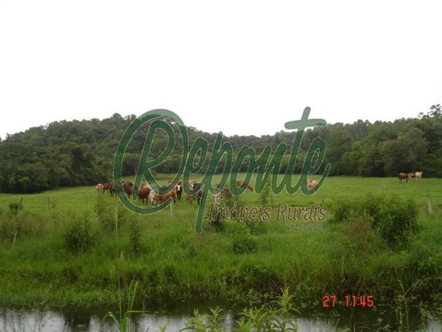 Fazenda em Rio Pardo