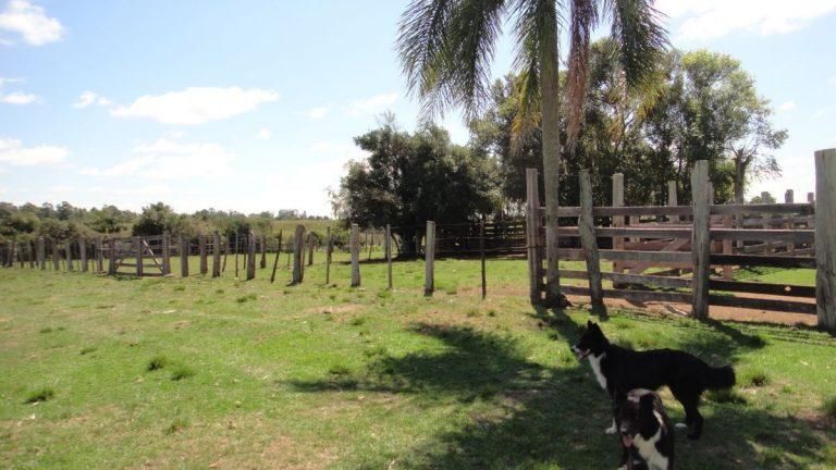 Fazenda em Cachoeira do Sul